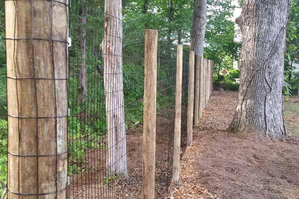 Fencing Image 3