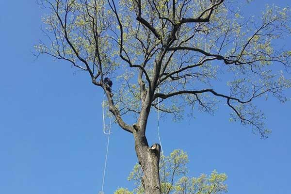 Tree Work Image 11