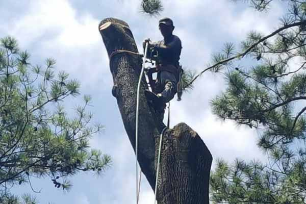 Tree Work Image 14
