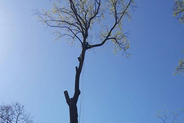 Tree Work Image 16