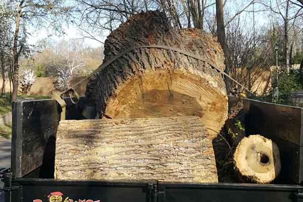 Tree Work Image 17