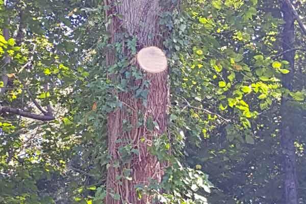 Tree Work Image 9